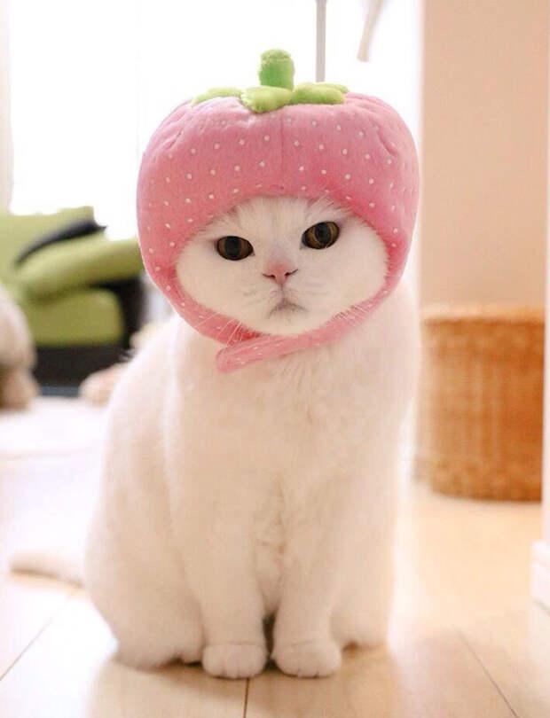 Самая ленивая кошка стала главной знаменитостью Японии