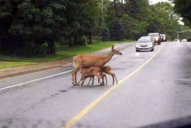 Мать кормит детей и пусть весь мир подождет! | Фото: Szeretlek Magyarorszаg.