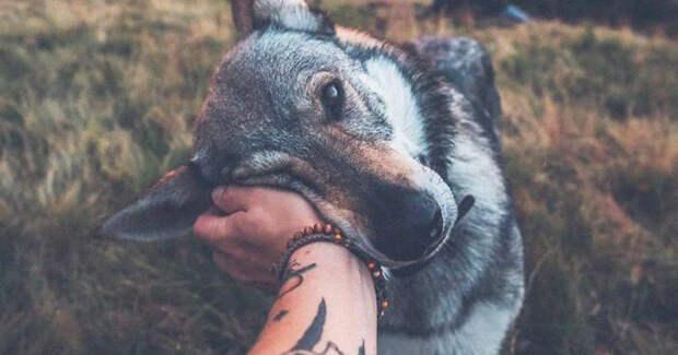 12 милейших фотографий из путешествия с собакой