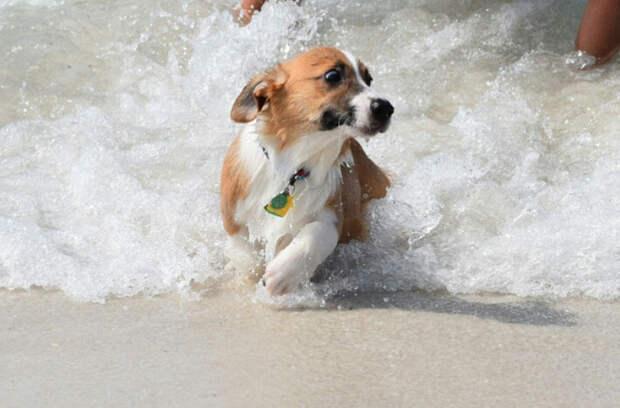 2. Цунами… Бежииииим! вода, собака