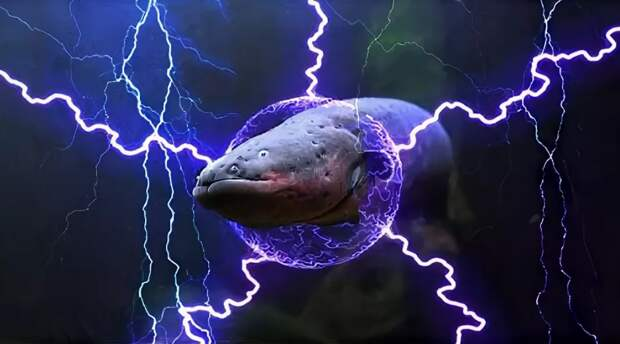 Электрический угорь: Рыба под напряжением в 800 вольт. Своим разрядом может свалить даже лошадь