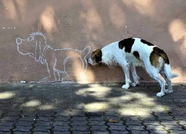 14. Хм... баловство, животные, питомец, поведение, собака, странность, юмор