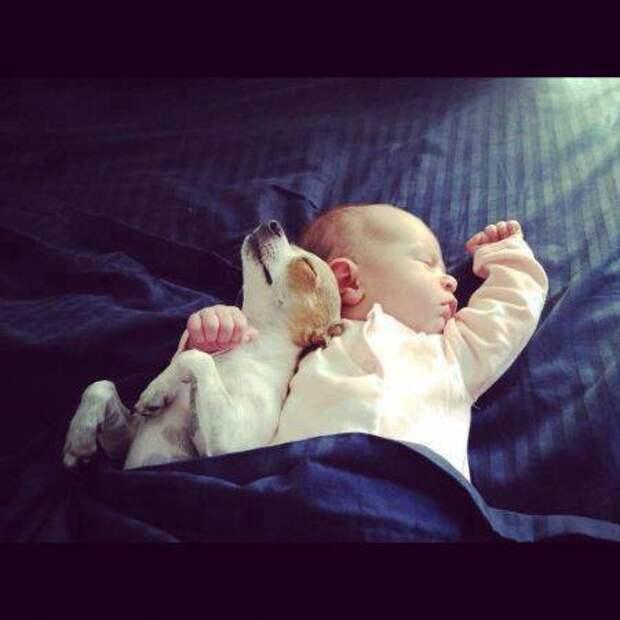 Спят усталые игрушки дети, животные, сон, фото