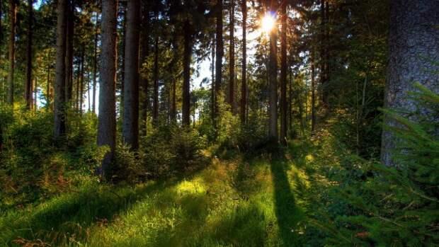 Священнослужитель вывез свою жену в лес и зарезал ее