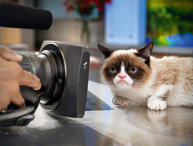 Статья о кошках из журнала «Вокруг света»