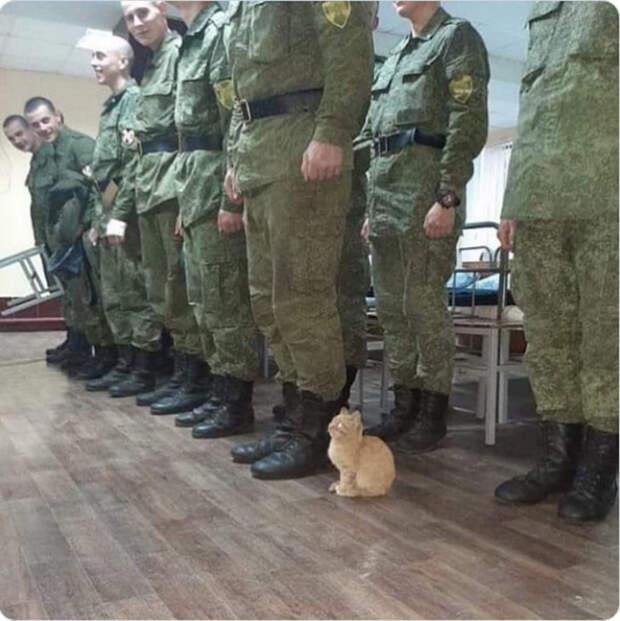 Этот кот действительно копирует своих людей, чтобы показать любовь!