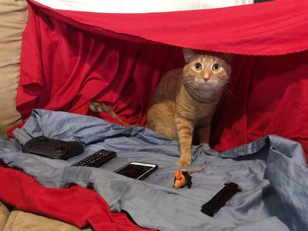 """10. """"Наш кот помешан на замках из одеял, и мы сделали ему этот. Бонус - если у вас есть деньги, он может вам что-то продать"""""""