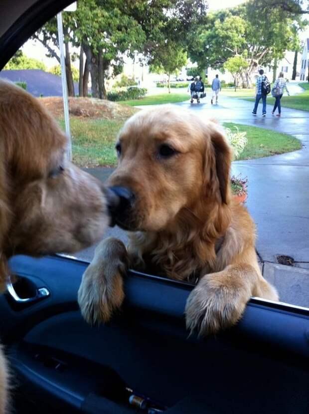 5. Трогательное прощание ветеринар, животные, милота, собаки