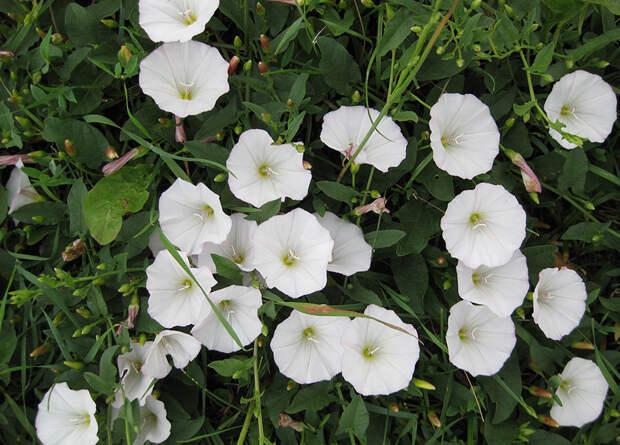 10 растений, которые лучше обходить стороной