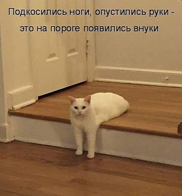 Котодром