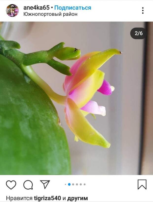 Жительница Южнопортового вырастила на окне редкую орхидею