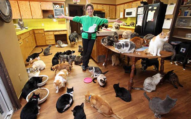 История о женщине с 1100 котов