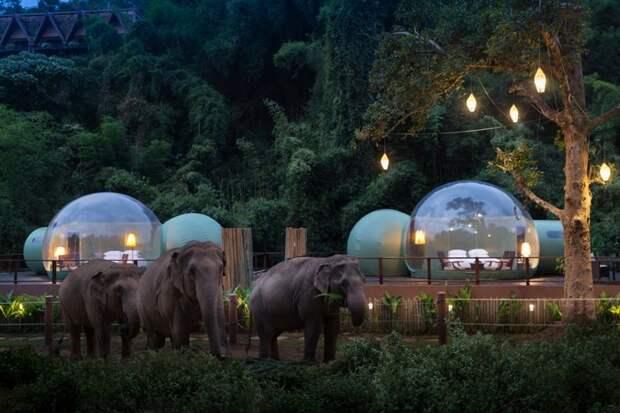 пузыри и слоны