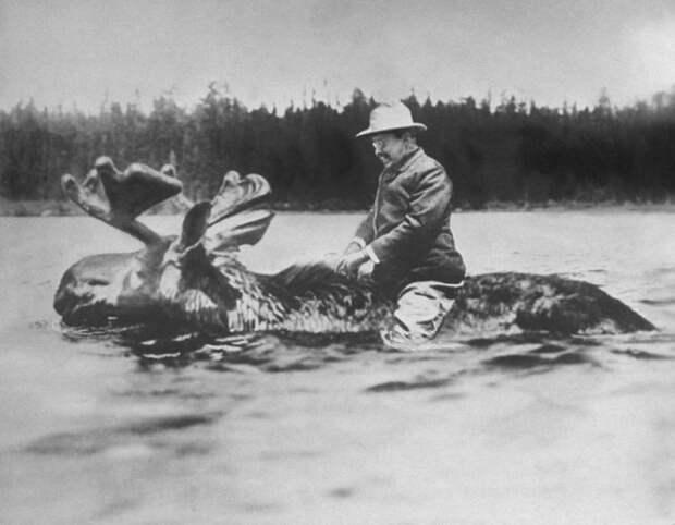 Губернатор штата Нью-Йорк и будущий 26-й президент США Теодор Рузвельт переплывает реку верхом на лосе, 1900 г история, картинки, фото