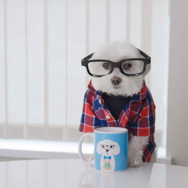 Стильная собака-хипстер покорила Instagram
