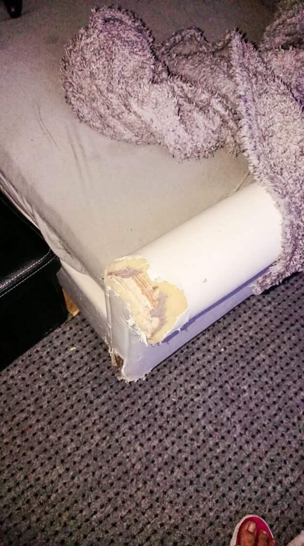Этой собаке всё прощается! Даже то, что она съела диван за час. А всё из-за её редкой особенности…