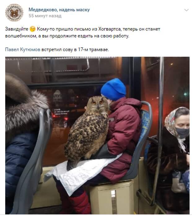 Фото дня: филин в трамвае на Дежнёва