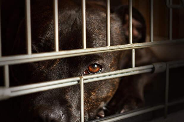 """""""Почему я никогда не возьму собаку из приюта"""": письмо анонима"""