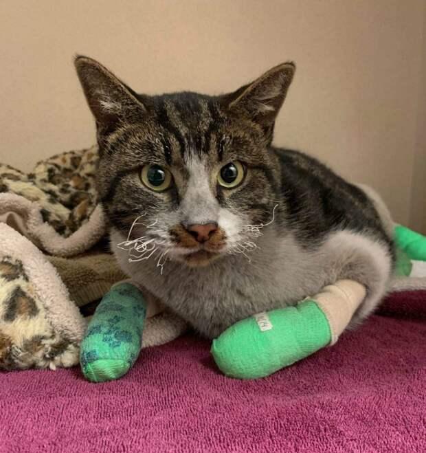 13. Геройский котик, спасенный из пожара в Калифорнии