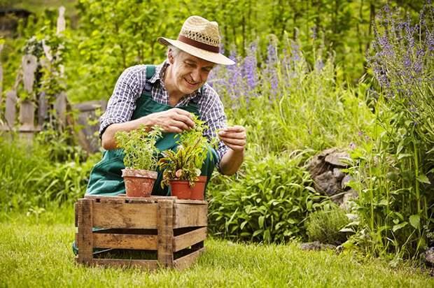 Заповеди садоводства. 5 наставлений, котором должен следовать каждый дачник