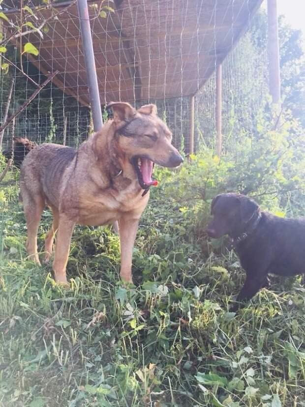 Подружился с другими собаками Плуто, животные, история, литва, пес, помощь, преображение, спасение