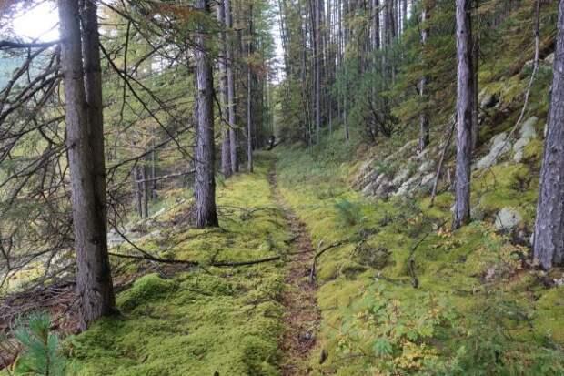 Власти Приамурья планируют открыть турмаршрут по старой царской дороге