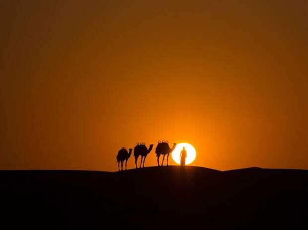 Караван в пустыне на закате