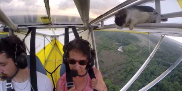 12. Совершил рискованный полет год, кот, событие
