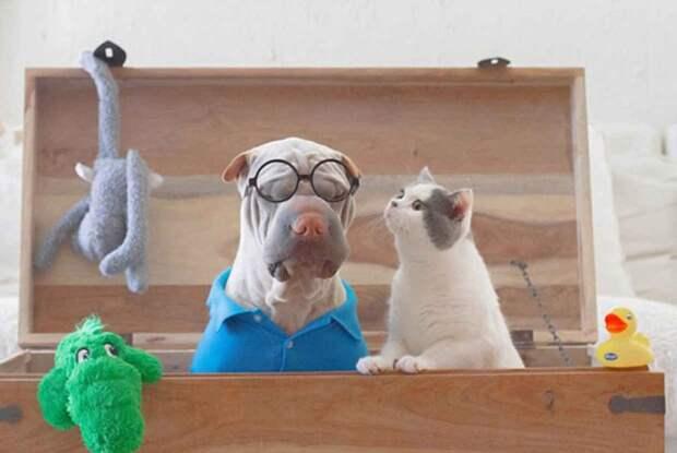 Шарпей и котик — самые фотогеничные друзья на свете