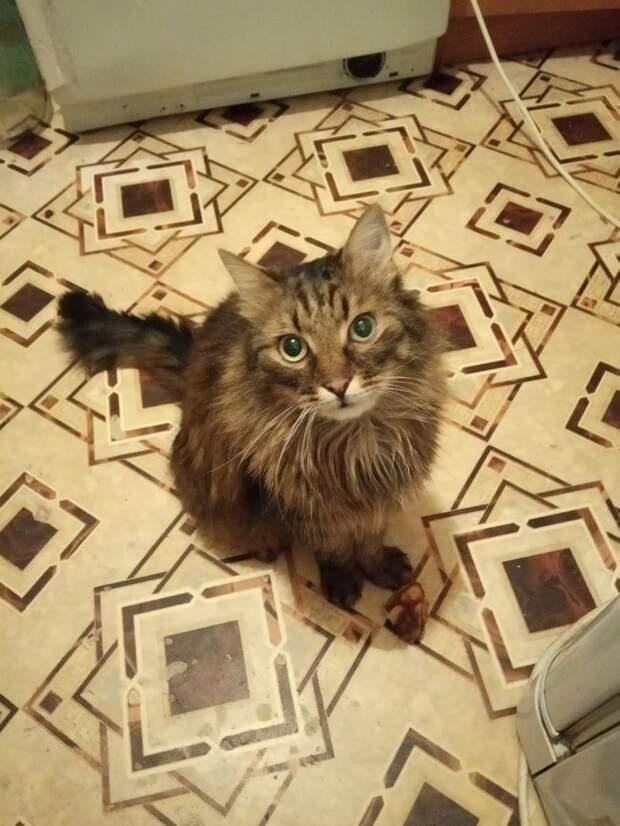 Кот вжался в стену подъезда, чтобы его не заметили. Испуганный МУРлыка вздрагивал от каждого шороха