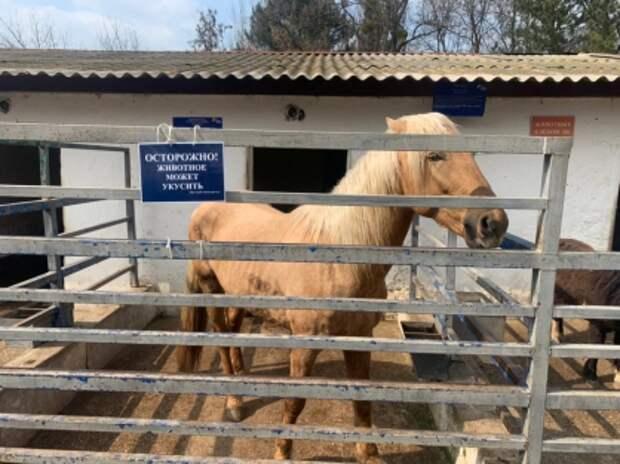 В Симферополе из-за лошади, которая откусила палец девочке, временно закрыли зооуголок