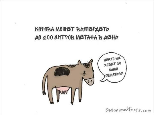 Грустные факты о животных животные, факты