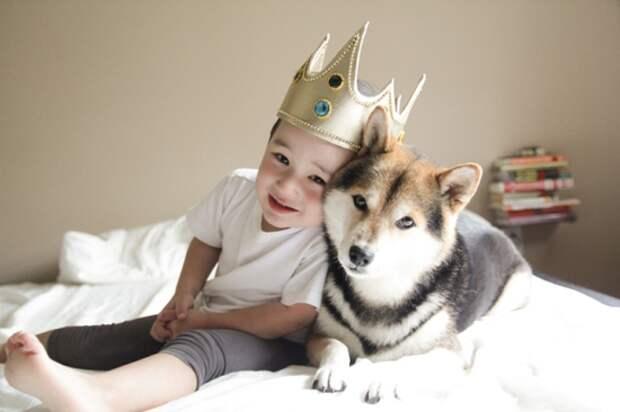 6. Лучший друг для деток с аутизмом дети, домашние животные, собака, собаки