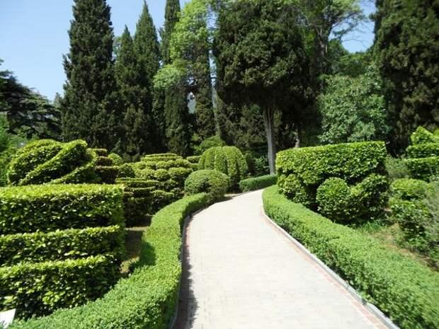Формованная живая изгородь из самшита вечнозелёного словно рама для картины с изображением зелёных топиарных фигур