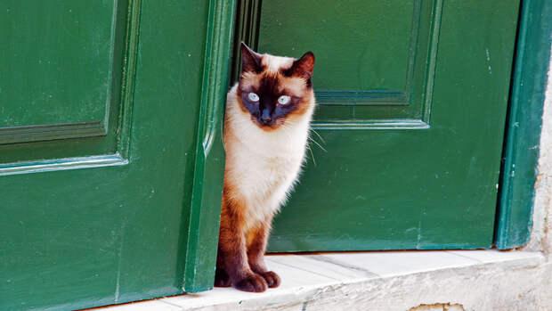 Камера в российском подъезде засняла кошку, звонящую в дверной звонок
