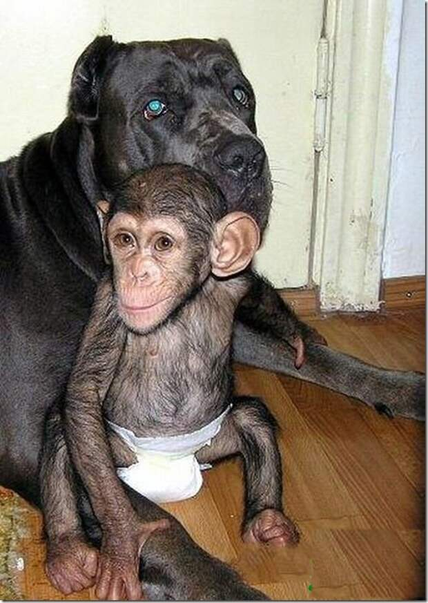 in-marmoset-a-new-mom_9_(www.funnypagenet.com)