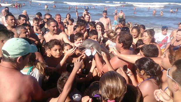Туристы до смерти «заселфили» детеныша дельфина