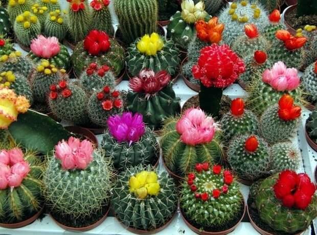 Цветок любви: комнатные растения, которые приносят в дом счастье