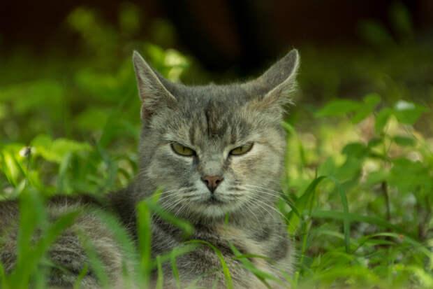 Ростовчанка за 500 рублей сдает в аренду очень злую кошку