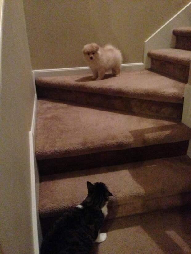 Эти коты впервые в своей жизни увидели щенка, еще и в своем доме