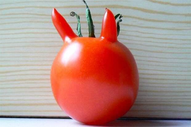 20. Томатный дьявол овощи, фрукиы