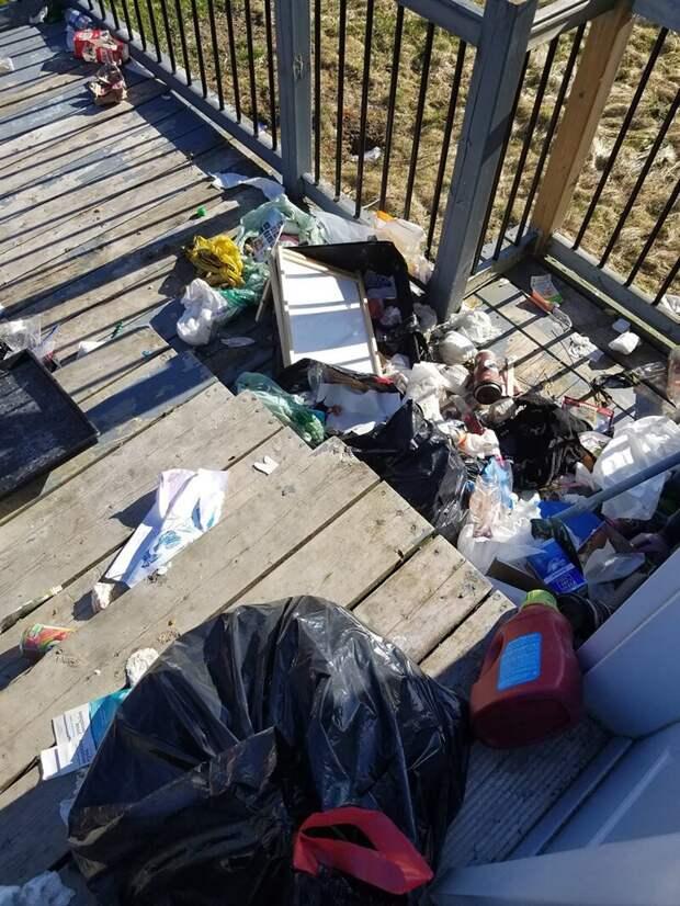 Место преступления животные, история, канада, медведь, мусор, подкуп, собака