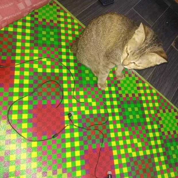 Совестливый котенок испортил хозяйские наушники и принес компенсацию