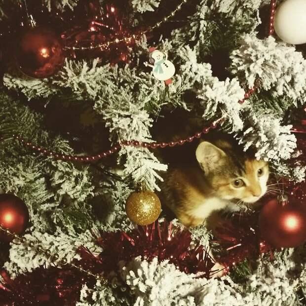 33. Рождественский подарок елка, кошка, подборка