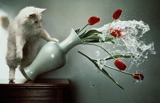 Специалисты объяснили, почему кошки все опрокидывают
