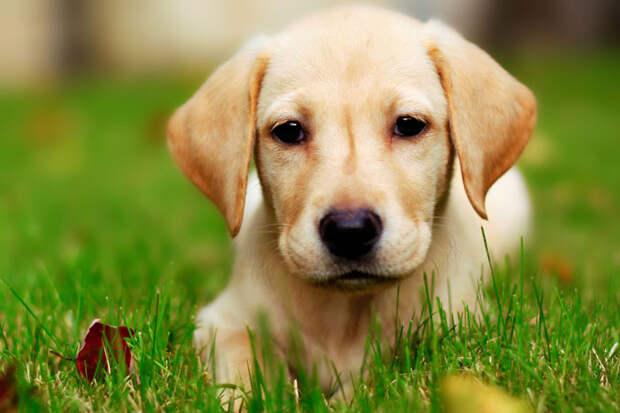 поразительные факты о собаках