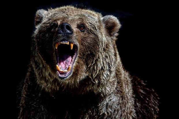 В московском цирке медведь убил мужчину