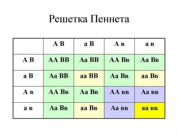 Как построить решетку Пеннета