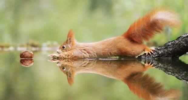 Wildlife photos austrian photographer julian rad fb1 700 png