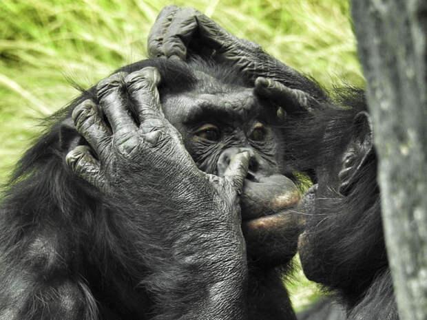 Я работаю в зоопарке. Вот 16 самых клевых фактов о животных, которые я узнала на работе